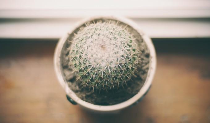 Qual è la pianta giusta per la tua casa? Scopriamolo insieme!